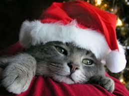 Une famille berlinoise retrouve le jour de Noël son chat disparu depuis sept ans