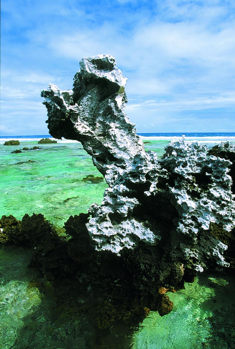 Un monstre marin ? Simplement le résultat de l'érosion sur le substrat calcaire de l'atoll, depuis qu'il s'est surélevé.