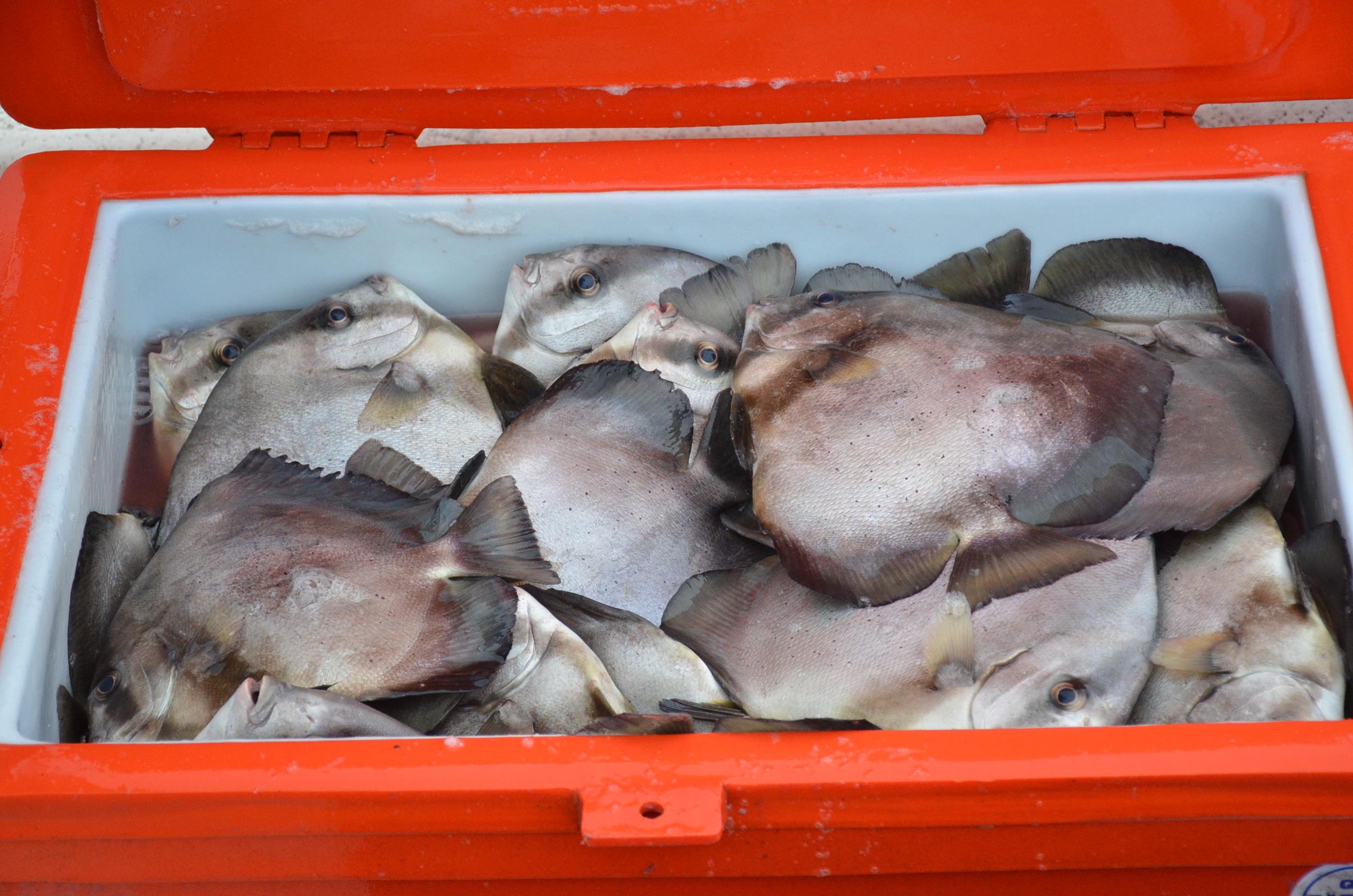 Production en baisse pour la pêche hauturière