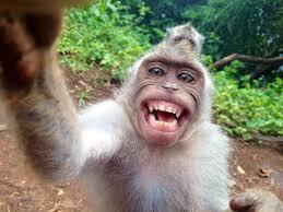 Un singe n'a pas de droits sur ses selfies, a estimé un tribunal américain