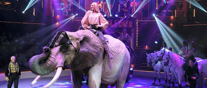 Maltraitance sur une éléphante: le cirque Bouglione entame des poursuites
