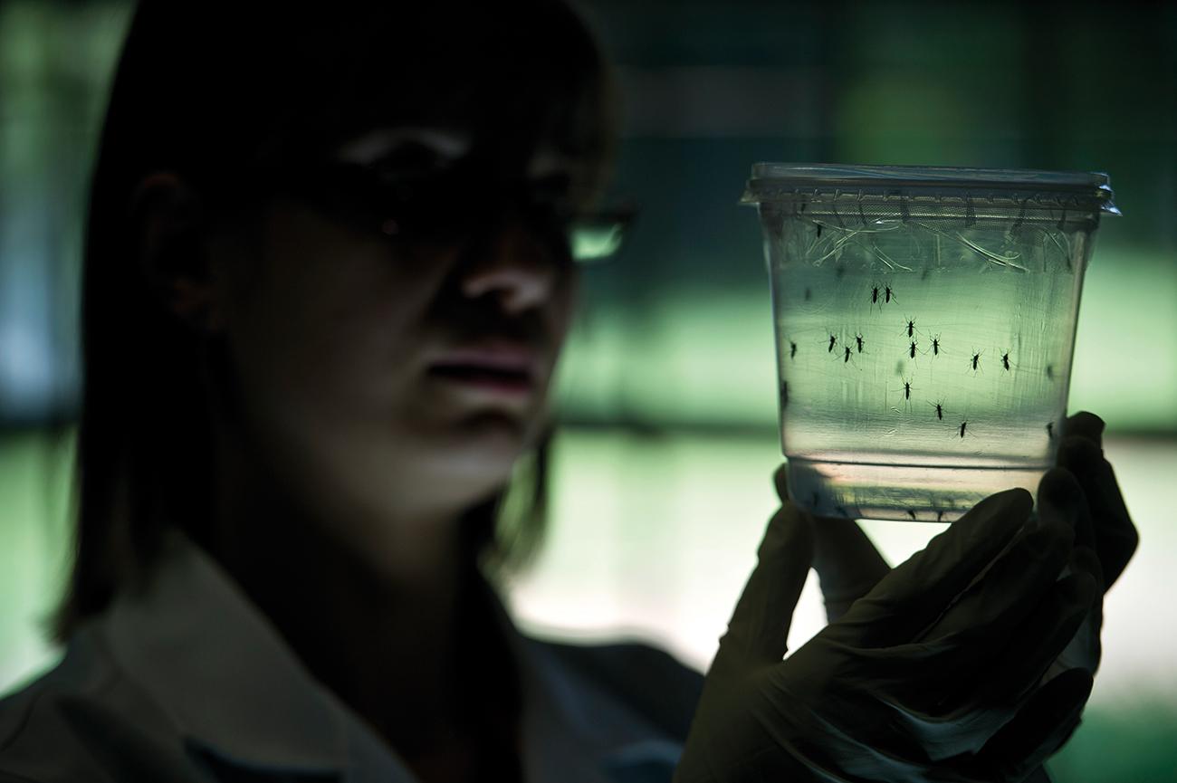 Brésil: test simultané pour diagnostiquer la dengue, le Zika et le chikungunya