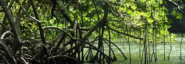 Nouvelle-Calédonie: deux enfants se noient accidentellement dans la mangrove