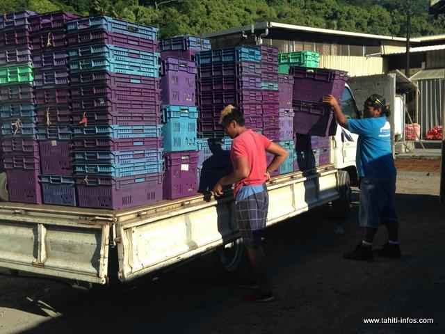 Deux fois par semaine, Vaiora livre plusieurs kilos de légumes à SIPAC