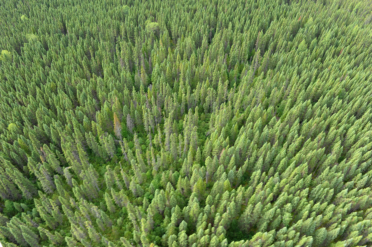 Le Canada sanctuarise une vaste forêt de la côte pacifique