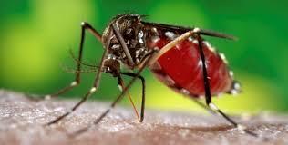 Le virus Zika s'étend en Amérique Latine, cas de transmission par voie sexuelle au Texas