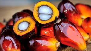 France/biodiversité: l'Indonésie fustige la taxe additionnelle sur l'huile de palme