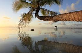 Tourisme: La Polynésie débarrassée du virus Zika, une destination sûre