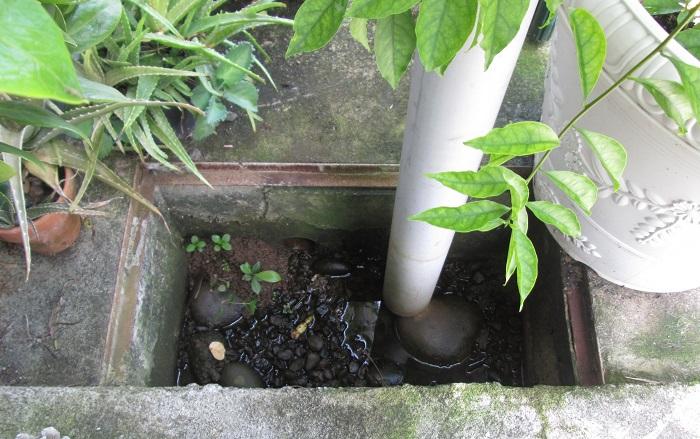 Les réserves d'eau, même les plus petites sont suffisantes pour qu'un moustique femelle puisse y déposer en moyenne 500 œufs après avoir ingurgité un repas de sang humain.