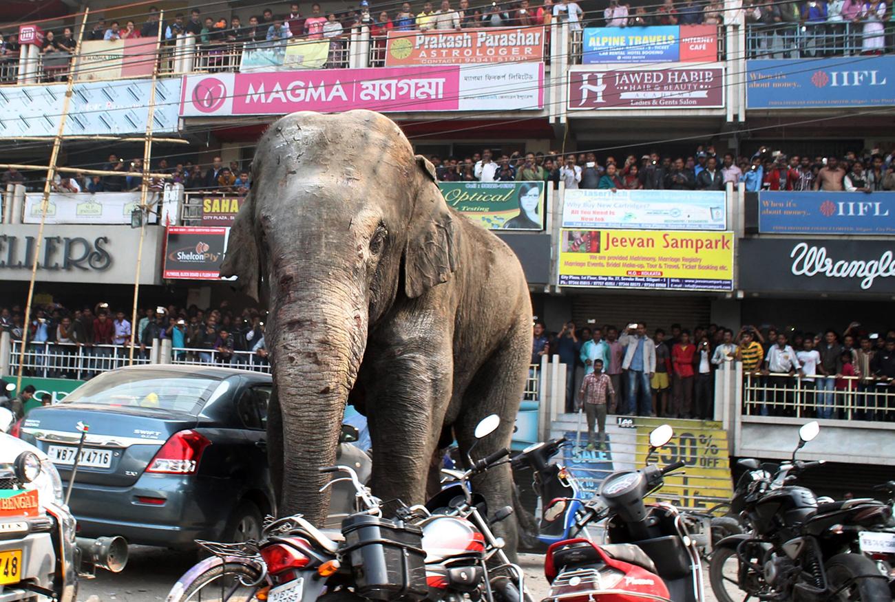 Chine: après un chagrin d'amour, un éléphant abîme de rage 19 voitures