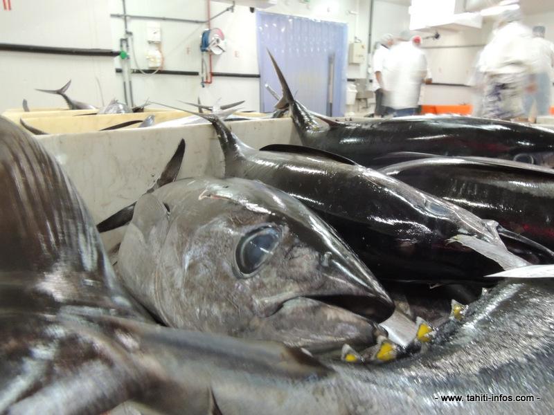 Exportation de poissons : un record en 2015