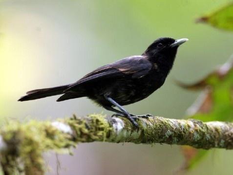 Le monarque fait ainsi partie des espèces protégées de catégorie A.