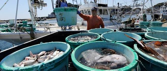 La vie houleuse des pêcheurs de Fukushima