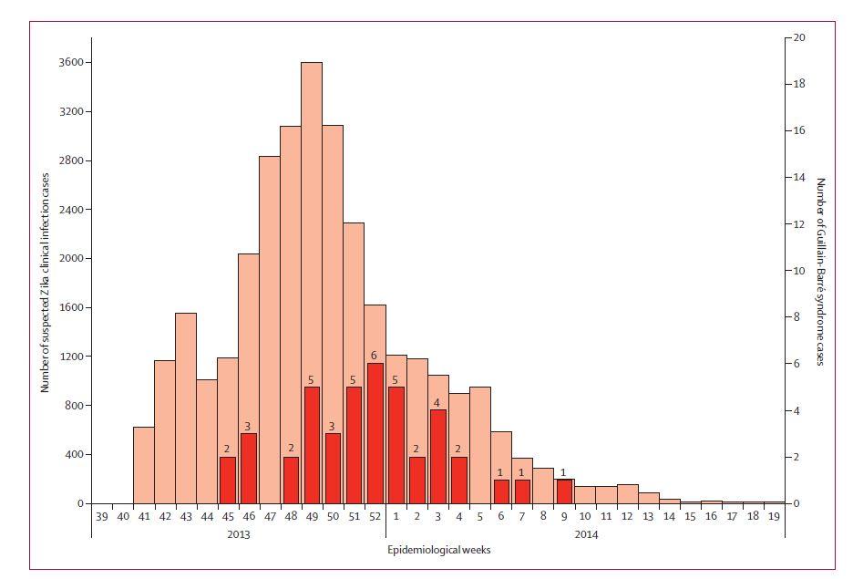 Nombre présumés de cas hebdomadaires d'infections par le virus Zika en comparaison avec le nombre de syndromes de Guillain -Barré en Polynésie française entre octobre 2013 et avril 2014. (Extrait de l'article paru dans la revue The Lancet).