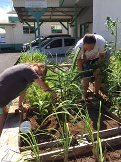 Un jardin partagé en plein cœur du centre-ville pour les familles nécessiteuses