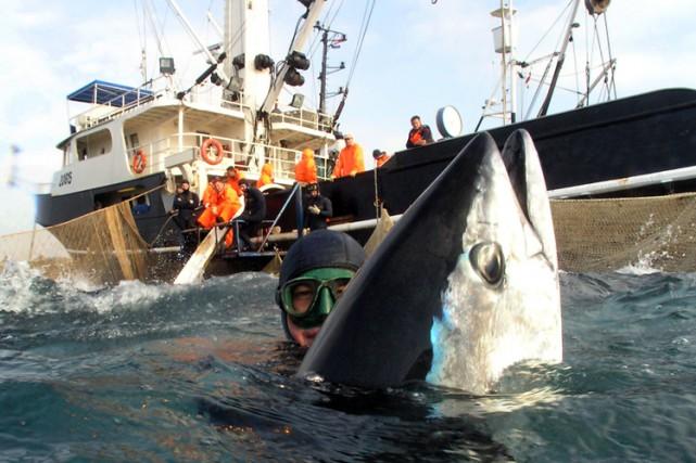Une ONG conteste les chiffres officiels sur les stocks de poissons en Europe