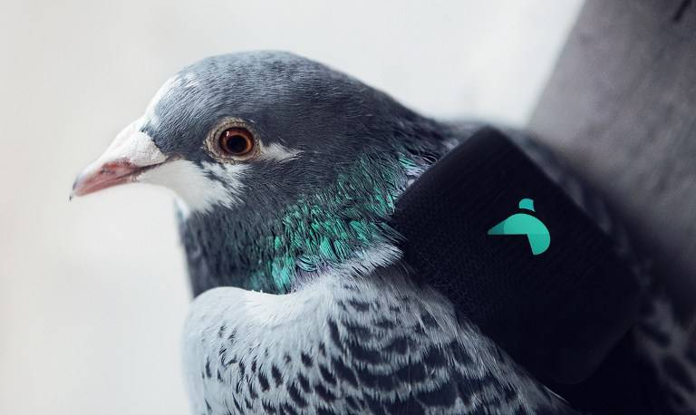 Une patrouille de pigeons mesure la pollution à Londres