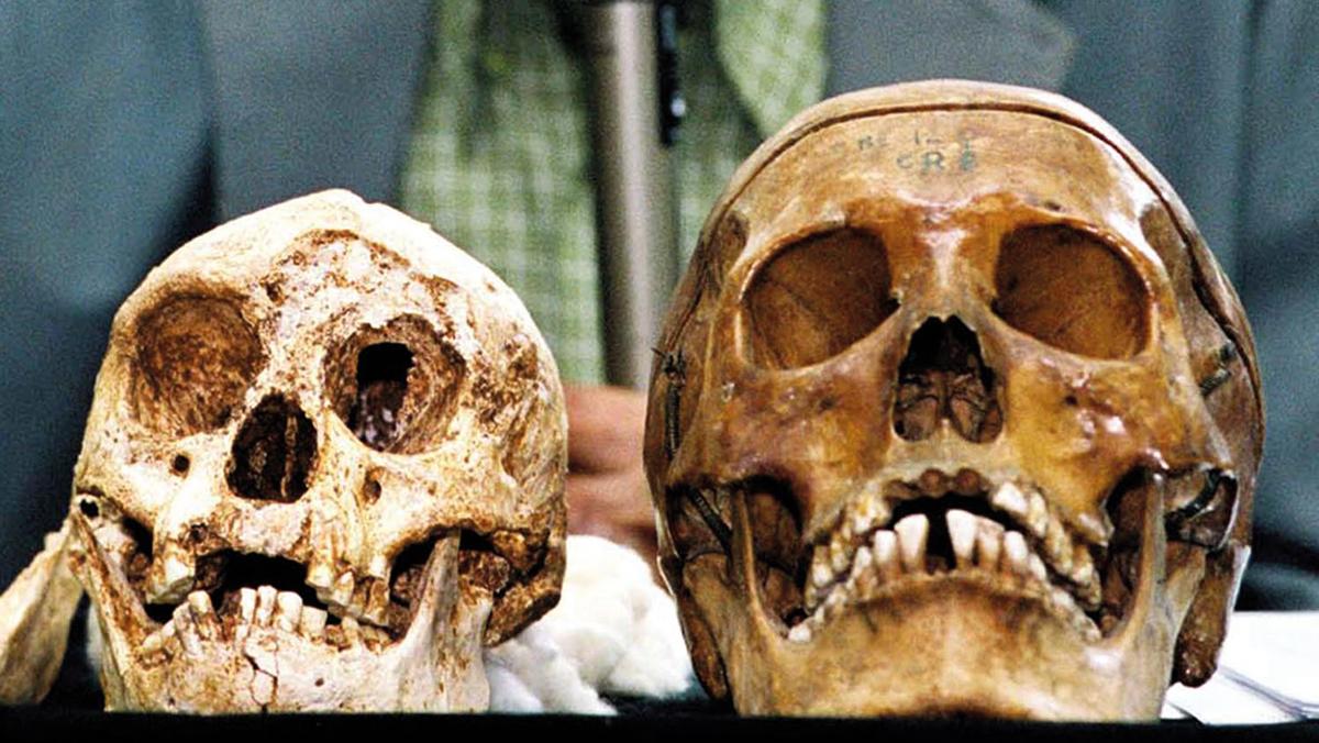 Le crâne de l'homme de Flores, à gauche.
