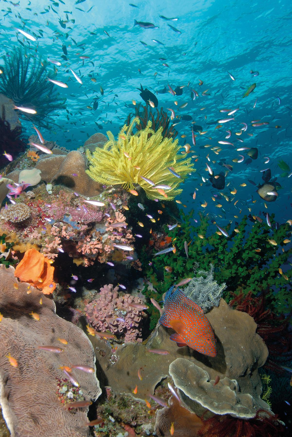 Grande barrière de corail: le Queensland accorde des licences à un projet minier controversé