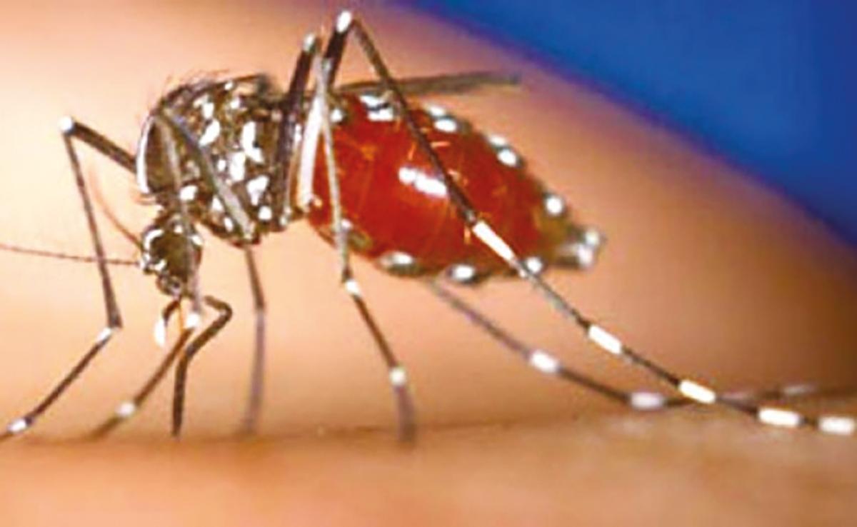 Dengue: Sanofi lance une campagne de vaccination de masse aux Philippines, une première mondiale