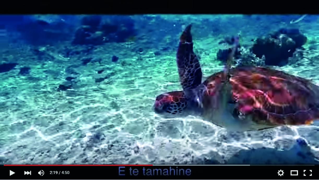 La journée polynésienne de la tortue est prévue le 19 avril.