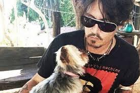 Chiens indésirables en Australie: Canberra se moque des étranges excuses de Johnny Depp