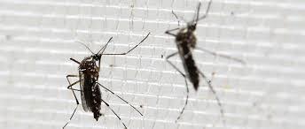 Le dérèglement du climat, facteur d'expansion de Zika, et autres virus