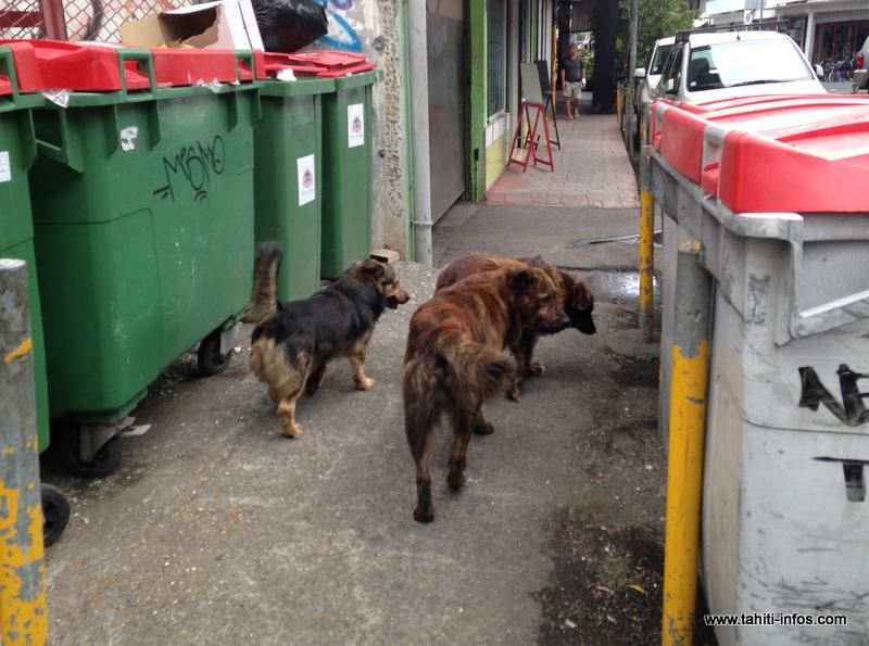 Comment quitter le territoire avec son chien ou chat ?
