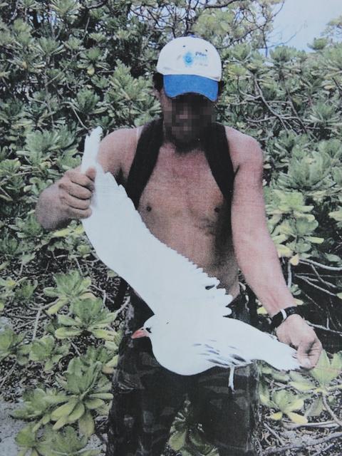 Île Maria : Des tava'e déplumés pour le Heiva