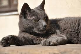 GB: le chat qui faisait trembler le facteur