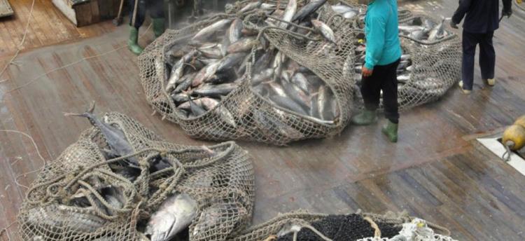 Cette nouvelle application permet aussi aux responsables des pêches de consigner des données lorsqu'ils sont sur le terrain, et ce, même s'ils n'ont pas accès à internet.