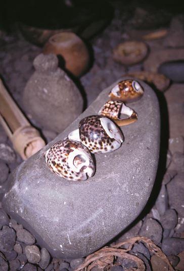 Quelques outils des temps anciens ; les porcelaines (coupées ou non) servaient à éplucher le 'uru ou étaient utilisées pour faire des leurres à poulpes.