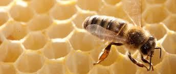 Loi biodiversité: indignation d'ONG après le vote du Sénat