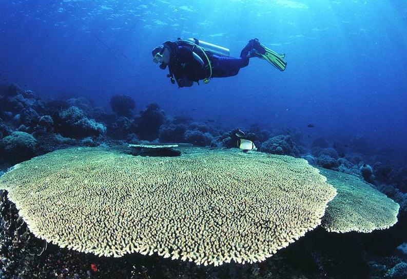 L'expédition Tara Pacific va, pendant plus de deux ans, étudier la biodiversité des récifs coralliens et leur évolution face au changement climatique - Maggy Nugues/CRIOBE