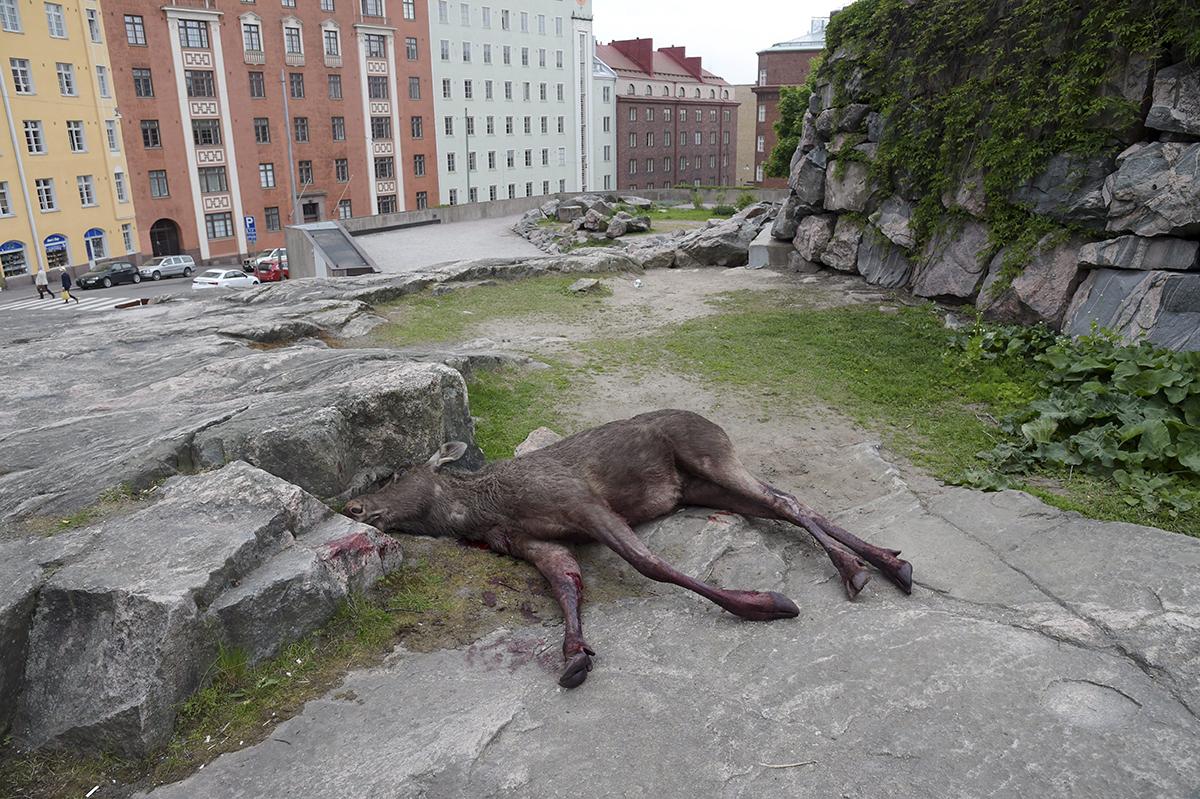 Casse dans une banque d'Helsinki: un élan entre en brisant la vitre
