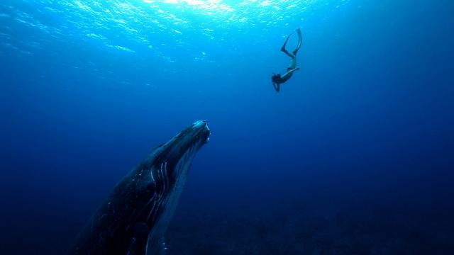 Leina Sato, filmée enceinte dans les eaux polynésiennes, sur le petit écran