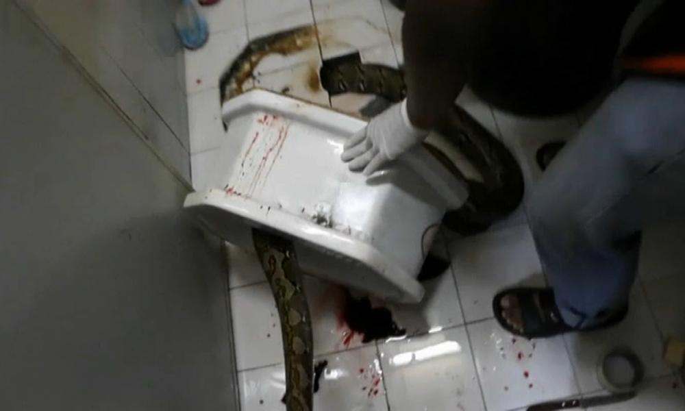 Thaïlande: un homme mordu au pénis par un python se rétablit