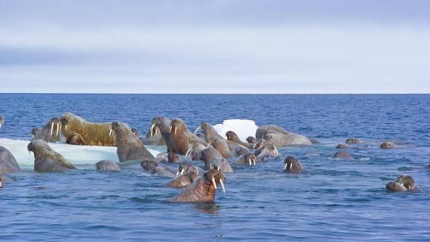 Shell se retire de l'Arctique canadien pour la création d'un parc marin
