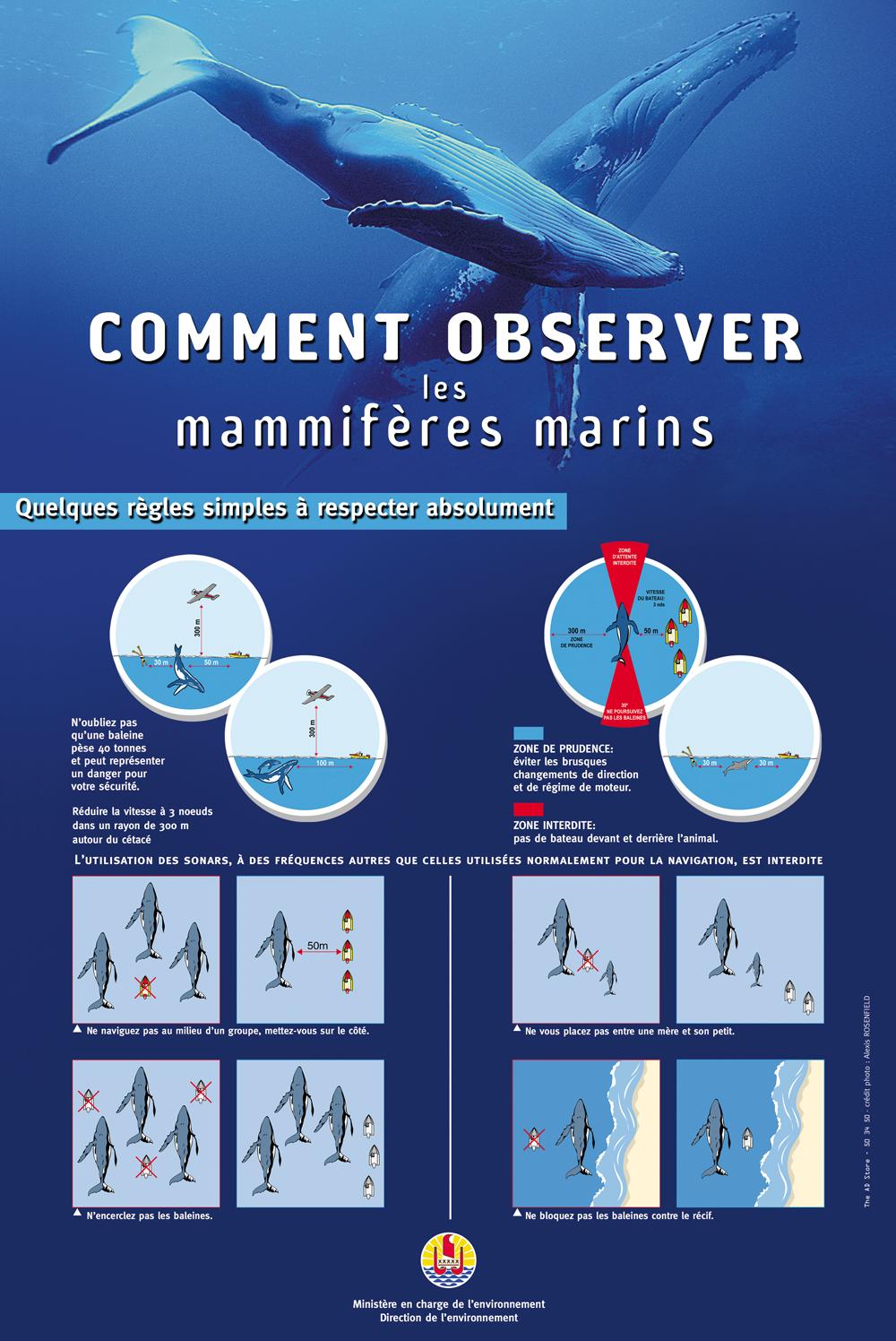 Mieux comprendre : Comment observer les baleines ?