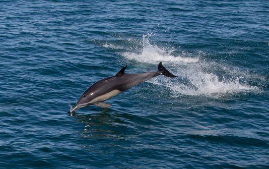 Vers la création du premier sanctuaire marin pour les dauphins en Amérique du Nord