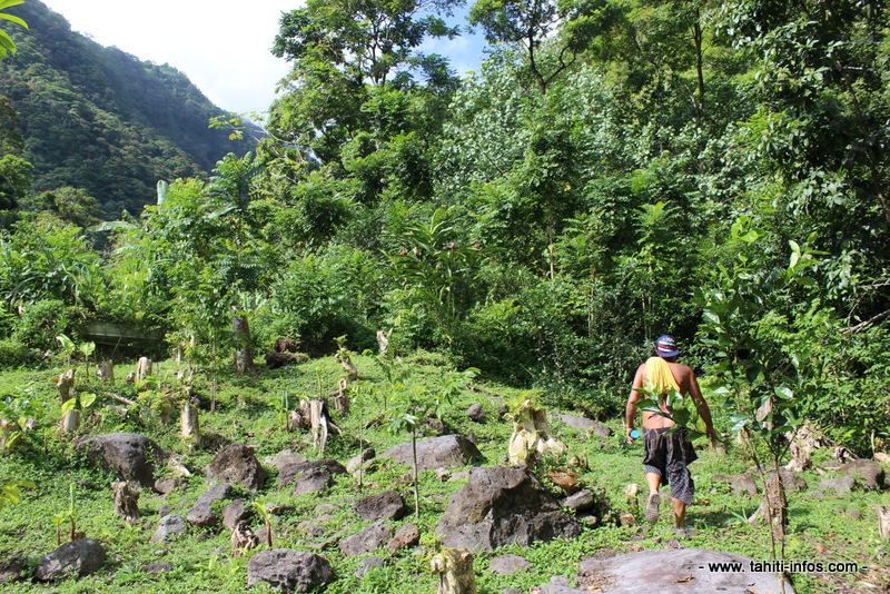 """Vallée de Tipaerui : un """"jardin d'Eden"""" à deux pas de la ville"""