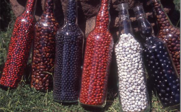 Les récolteurs de graines les vendent au litre ou à la bouteille.