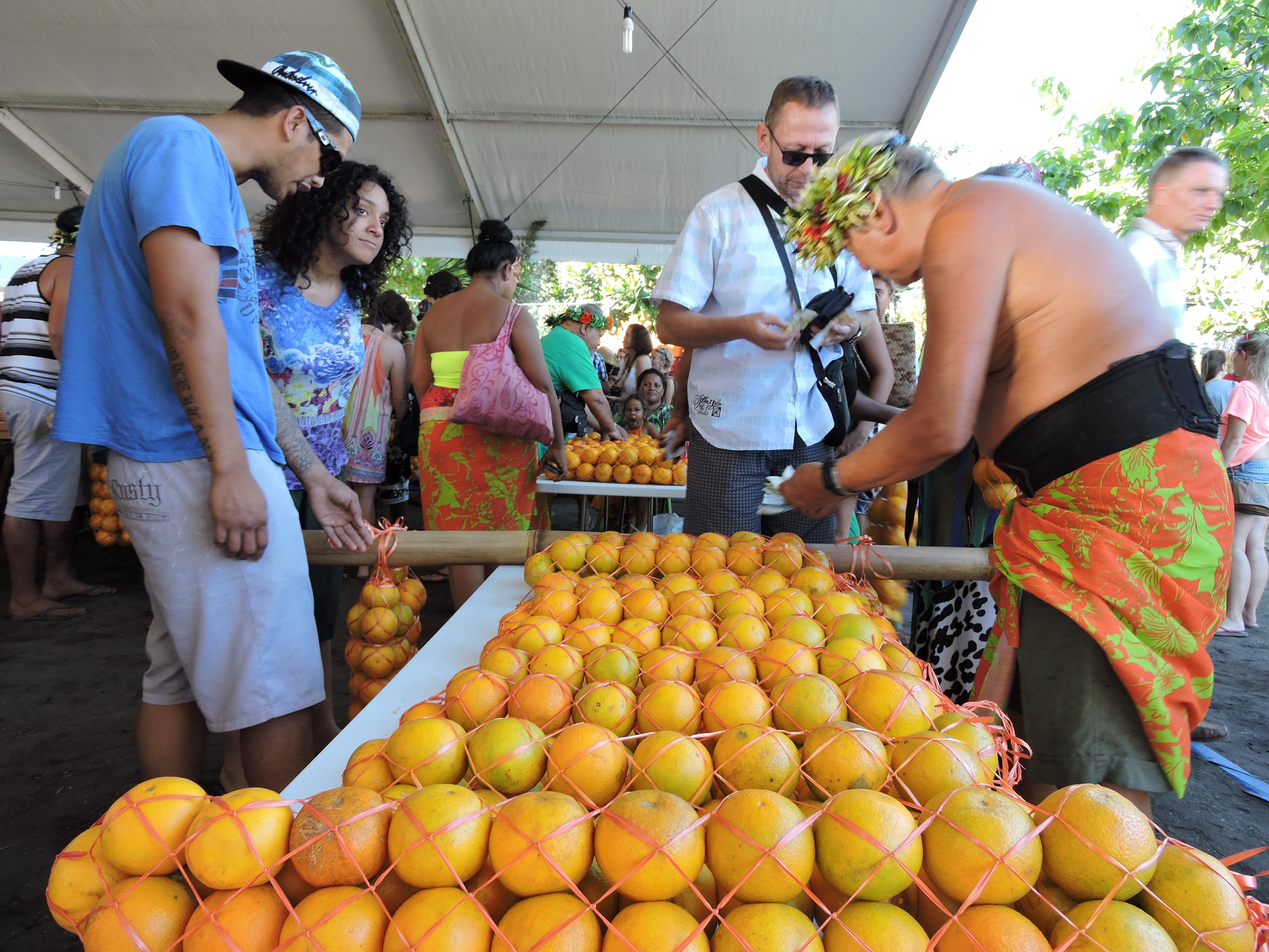 Punaauia : la cueillette des oranges a commencé