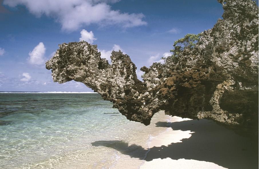 """Le """"dragon de corail"""" qui a donné son surnom à la calanque."""