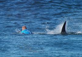 L'Australie, haut lieu du surf, a peur des dents de la mer