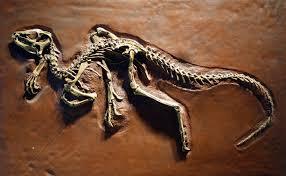 Un petit dinosaure révèle son anatomie cachée grâce aux rayons X