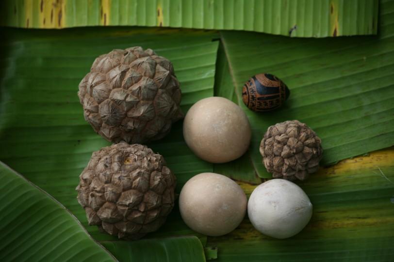 La noix du enu, une graine grosse comme une orange, qui semble facettée.