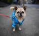 La mode canine s'empare des rues de Shanghai