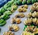 https://www.tahiti-infos.com/Un-nouveau-point-de-vente-de-fruits-et-legumes-locaux-a-Papeete_a179208.html