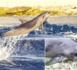 https://www.tahiti-infos.com/Un-dauphin-meurt-apres-une-collision-avec-un-paquebot-a-Tiputa_a183326.html